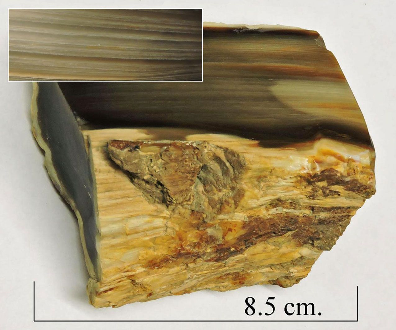Petrified wood.